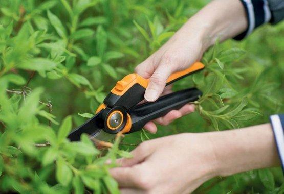 Ağaçlarınız ve çalılarınızı temizleyin